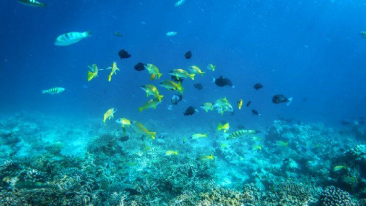 Despre Maldive si vacantele petrecute aici