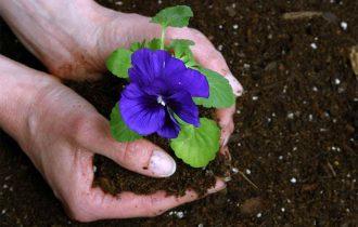 Cum poti utiliza corect pamant si turba pentru flori si legume