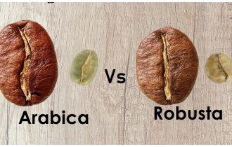 Cafea robusta vs. cafea arabica